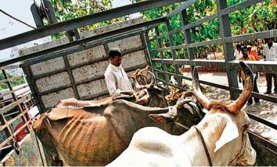 latest-news-cow-vigilantes-brutally-thrashed-by-traders