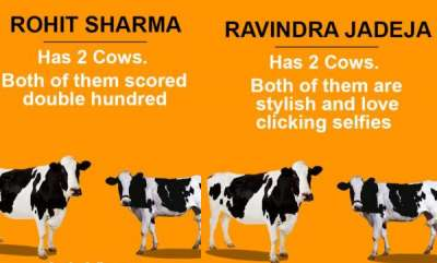 latest-news-two-cow-theory-related-to-indian-players
