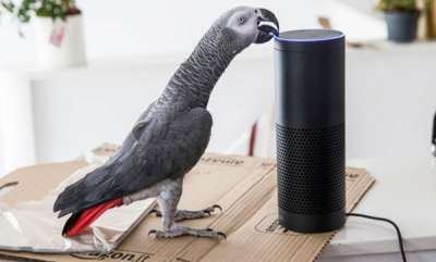 odd-news-parrot-goes-viral-after-placing-amazon-order