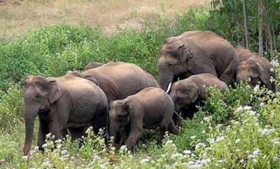 environment-world-animal-day