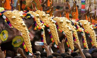 business-news-elephants-also-have-gst