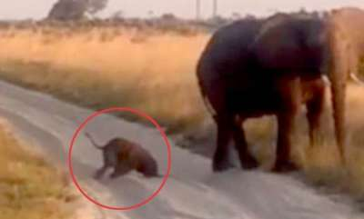 environment-adorable-baby-elephant-stumbles-falls
