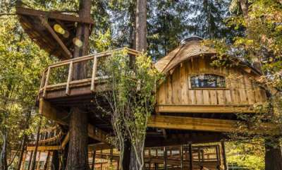 tech-news-microsoft-literally-built-treehouses-for-its-employees