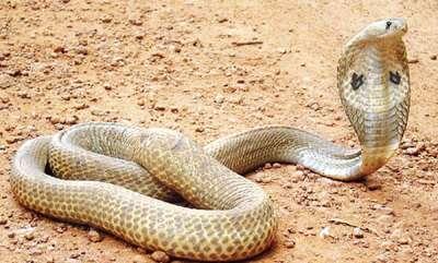 environment-snake-fear