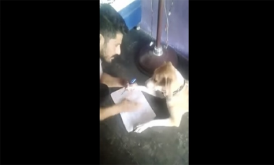 latest-news-man-beating-dog-for-teaching-english-viral-video