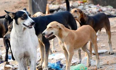 latest-news-missing-four-year-olds-dead-body-found-as-stray-dogs-eaten