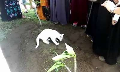 environment-cat-appears-during-funeral-and-refuses-to-leave-mans-grave