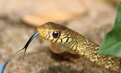 environment-snake-bite-college-principal