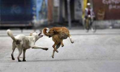 latest-news-stray-dog-attacked