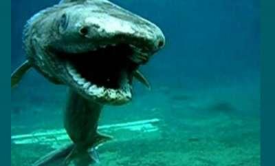 environment-strange-frilled-shark-caught-in-portugal