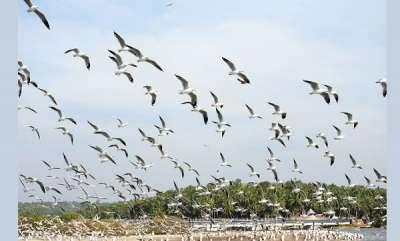 environment-indias-first-bird-atlas-developed-in-kerala