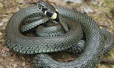 odd-news-snake-found-in-school-bag