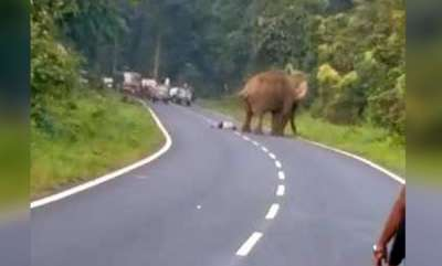 environment-elephant-tramples-man-who-tried-to-take-its-photo-on-bengal-highway