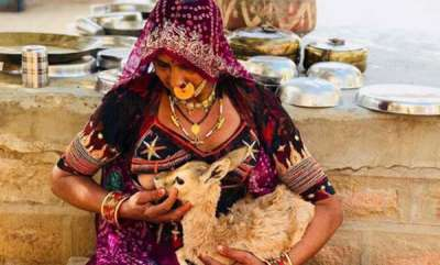 rosy-news-bishnoi-woman-breastfeeds-baby-deer