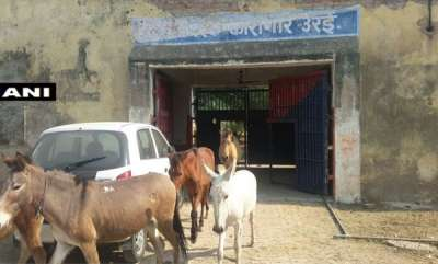 latest-news-donkeys-spend-4-days-in-up-police-custody-for-eating-expensive-plants-at-jalaun-jail