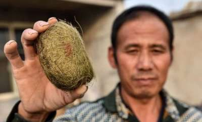 environment-man-who-found-a-pigs-gallstone-when-killing-a-sow-discovers-its-worth-450000