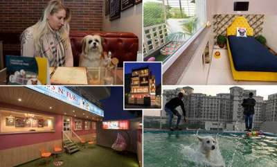latest-news-5-star-rooms-with-swimming-pool-indias-first-hotel-for-dog-is-inaugurated