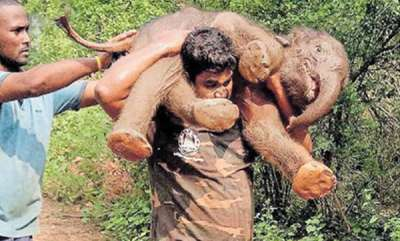 environment-baby-elephant-is-rescued-from-canal-in-koyambathur