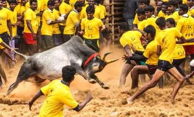 latest-news-jellikkettu-league-in-tamil-nadu