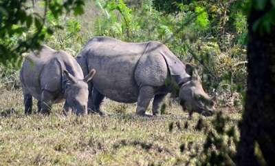 environment-manas-national-park-to-get-three-rhinos