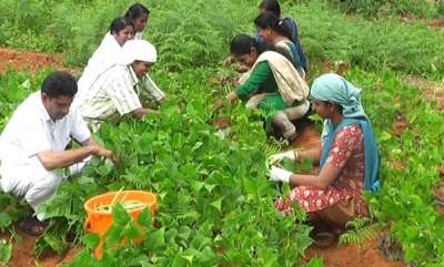 mangalam-special-organic-farming