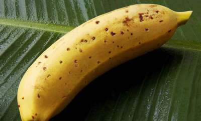 surprise-japanese-farmers-develop-incredible-banana-with-edible-skin
