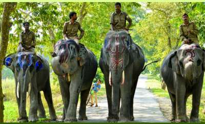 environment-corbett-national-parks-adored-safari-elephants-get-a-retirement-party