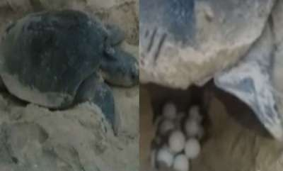 environment-sea-turtle-in-kasargodu