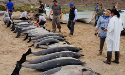 environment-21-dolphins-die-after-attack-by-rival-gang-they-had-bite-marks