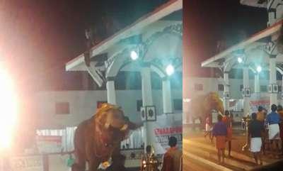 latest-news-elephant-turns-violent-at-ettumanoor-temple