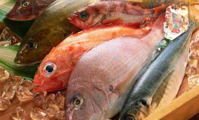 business-news-fish-home-delivery-app