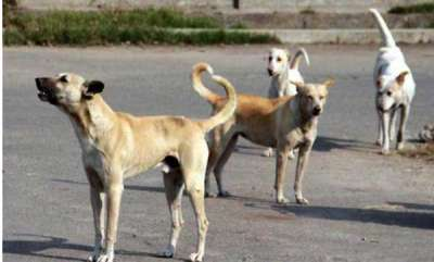 latest-news-9-year-old-boy-mauled-to-death-by-stray-dogs