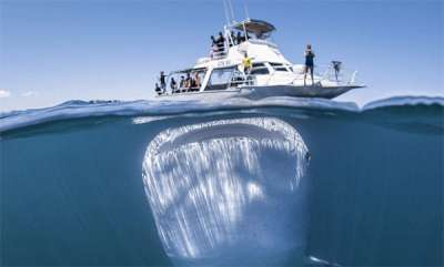 latest-news-blue-whale