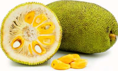 latest-news-jack-fruit-to-be-state-fruit-declaration-on-march-21