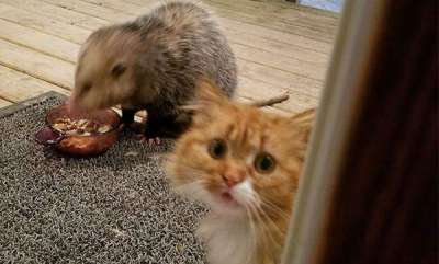 latest-news-rat-and-cat