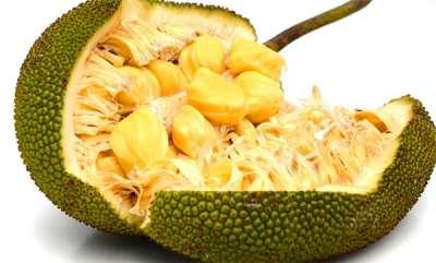 latest-news-jack-fruit-keralas-official-fruit