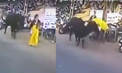 latest-news-ox-attacked-woman
