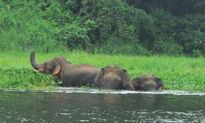 environment-wild-elephants-move-out-of-forest-in-kerala