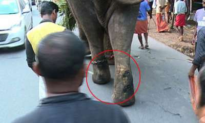 environment-elephant-abuse-in-kochi
