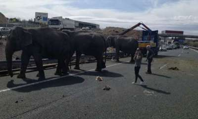 latest-news-elephant-injured-in-road-accident