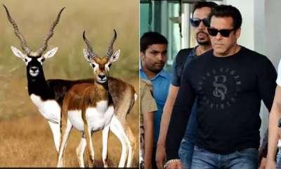 environment-salman-khan-guilty-of-killing-blackbucks-that-are-worshipped-by-bishnois