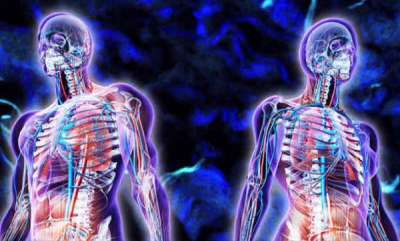 latest-news-scientists-discover-new-organ-spanning-human-body