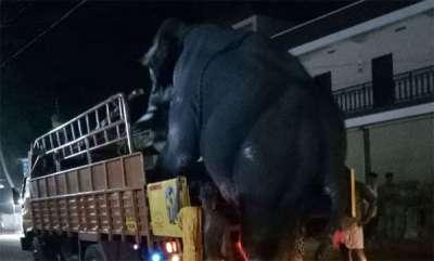 latest-news-malappuram-ponnani-elephant-attack-issue