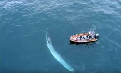latest-news-blue-whale-in-sea