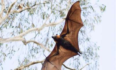 odd-news-kozhikode-nipah-virus-central-report