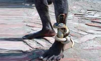 latest-news-snake-bite