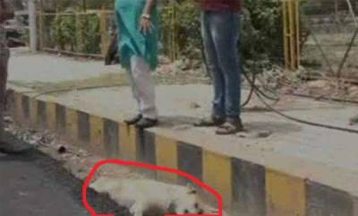 india-social-media-angry-after-dog-buried-alive-in-agra