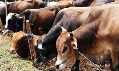 latest-news-accused-of-stealing-cattle-two-men-beaten-to-death-by-mob-in-jharkhand
