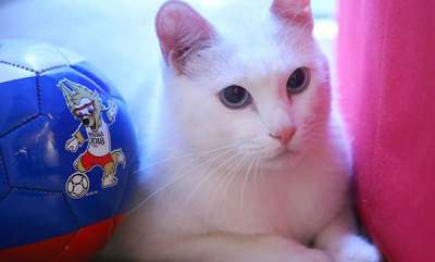 latest-news-world-cup-oracle-cat-predicts-irans-victory-over-morocco