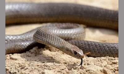 latest-news-girl-students-admitted-to-hospital-after-coming-into-contact-with-snake-poison